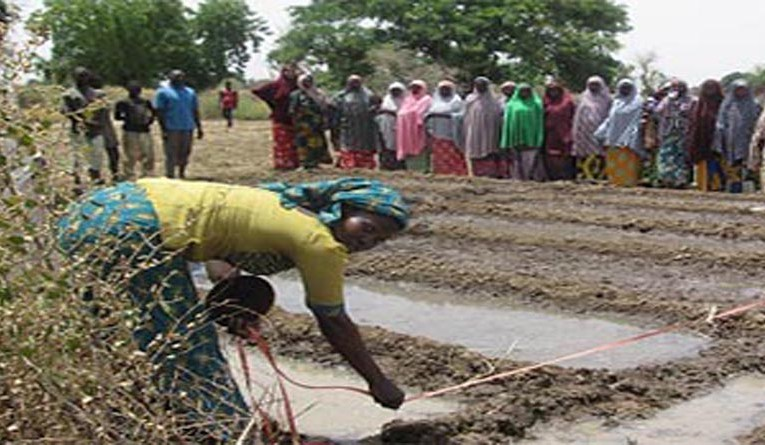 TechnoServe: Improving rice and tomato farmers' livelihood in Nigeria