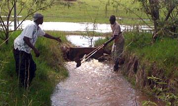 waterharvest2