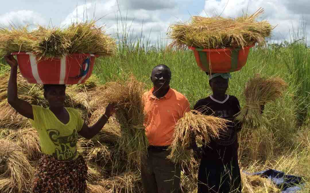 a group of farmers in Africa