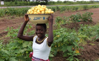Agriculture Program in Sierra Leone Provides Staples to Prevent Starvation