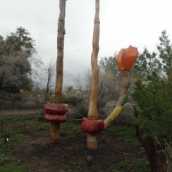 Desert botanic garden Phoenix: Cactus garden