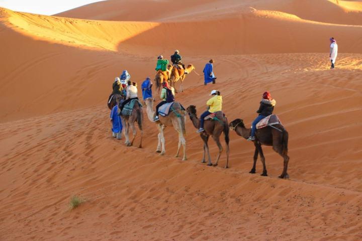 Camel caravane ,Tunisia Sahara
