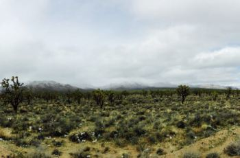 Photo: Mojave desert ,the gardening in this area may differ of Sonoran desert