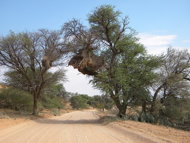 Kgalagadi park where located wilderness camps