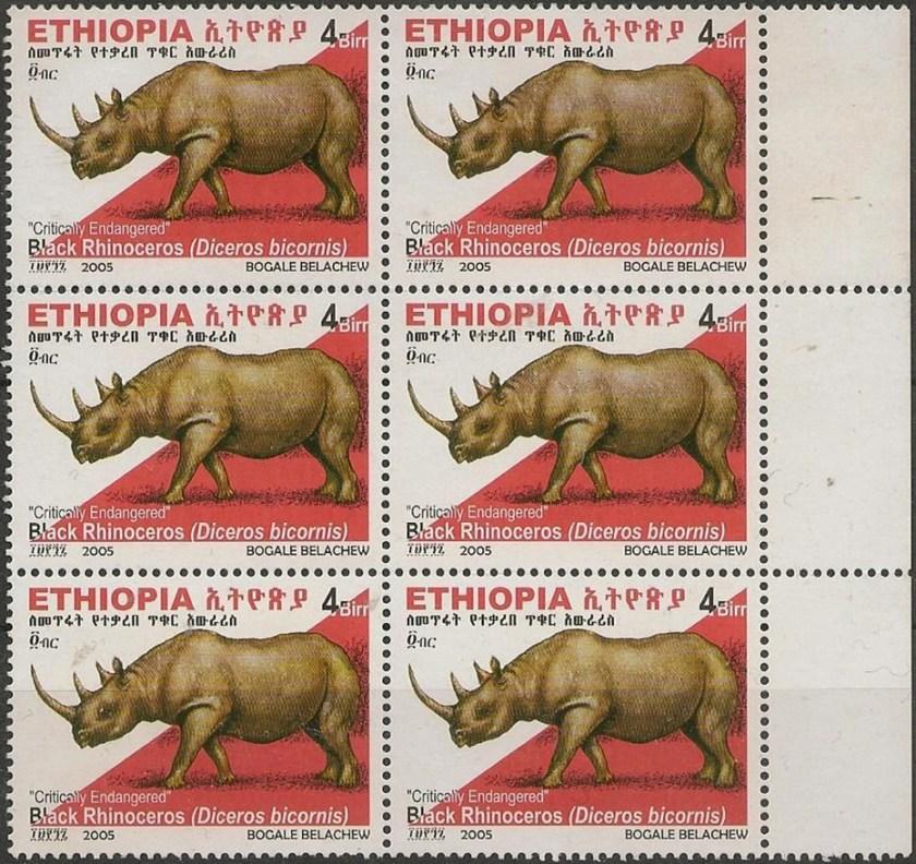 black rhinoceros 72