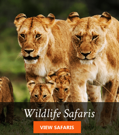 Kenya wildlife safari packages
