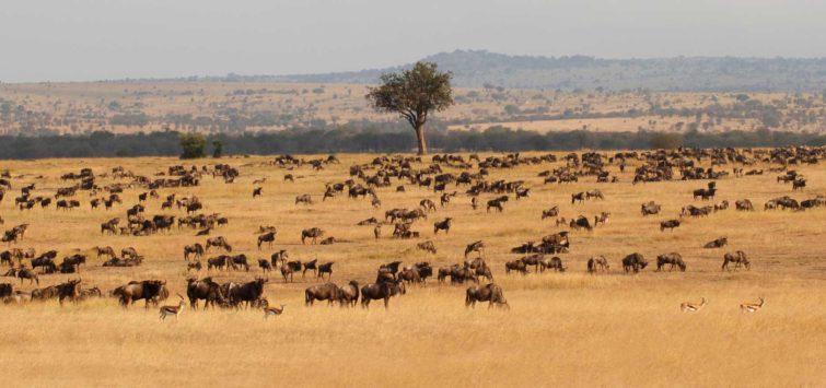 Victoria Falls Masai Mara Serengeti - safari