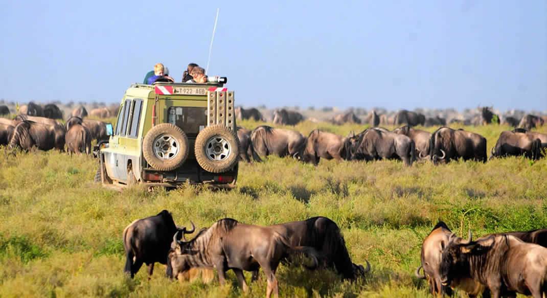 Serengeti Africa Safaris