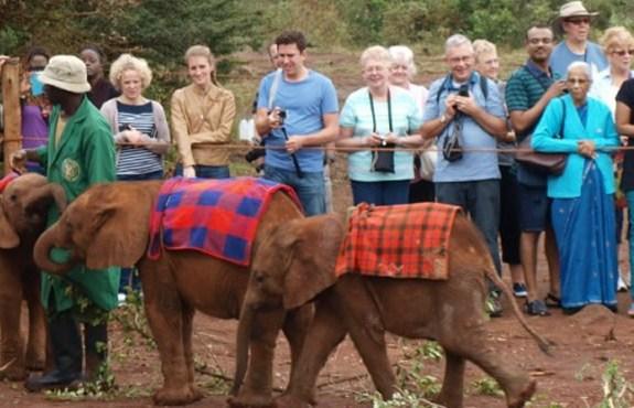 elephant orphanage in Nairobi
