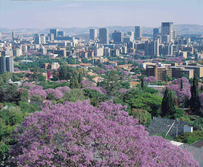 Jacaranda Season Is Ending But Heres A Reminder Of How Trees Are