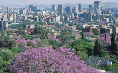 Jacaranda Season Is Ending, But Here's A Reminder Of How Trees Are Very Political In Africa