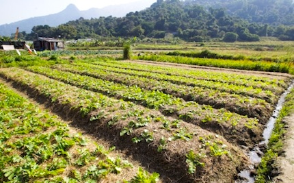 Saudi Company to set up Agric City in North Central Nigeria