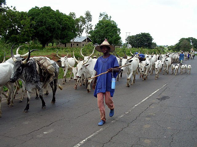 Fulani, Farmers Conflict In Nigeria Not Ethno-Religious, But...