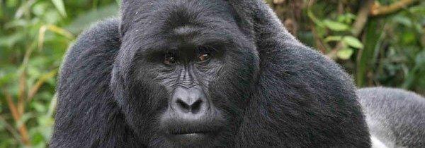 Uganda, gorilla e laghi incantevoli
