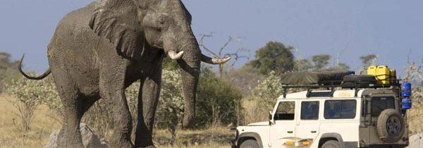 Botswana: safari e comfort