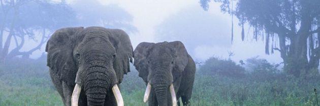 Tanzania: l'eden di Ngorongoro