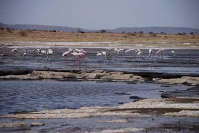 Magadi es espectacular para contemplar aves