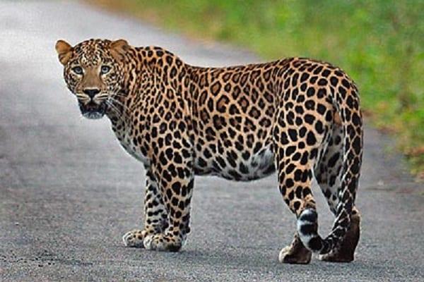 Afrique: Ces 6 animaux sont les plus recherchés dans l'industrie de la mode. (PHOTOS)
