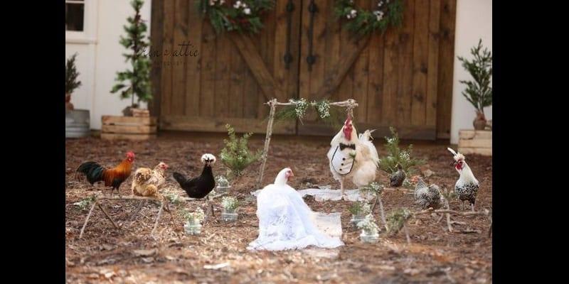 États-Unis: Une femme organise une cérémonie de mariage pour ses 2 poulets (photos)