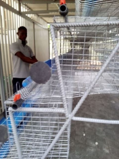 The cages' wire mesh is made of galvanized iron which prevents rusting and gives the cages a longer life span
