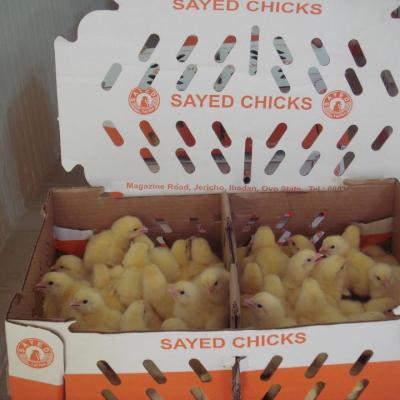 sayed-arbor-acres-broilers