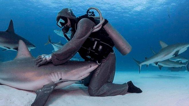 Shark dancer dances with sharks and overlook their fierce bites