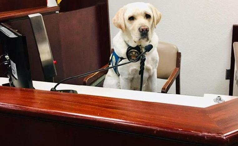 Photo of Assistance dog Raider helps 12 children during emotional lawsuit