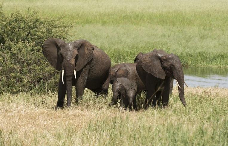 British soldier killed by elephant during mission in Malawi