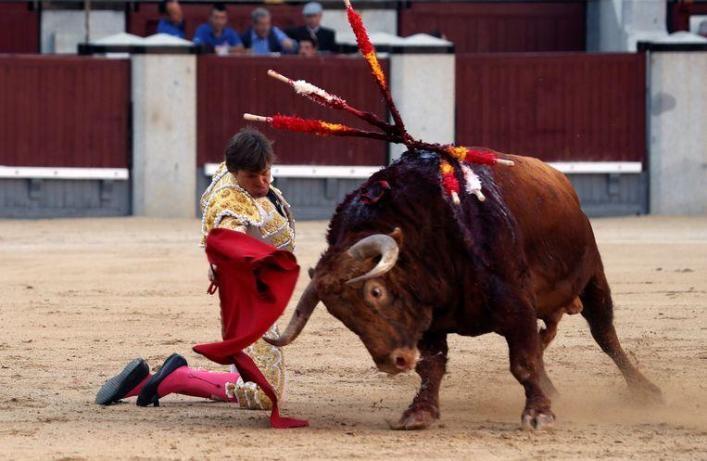 Bull rigs French matador on his horn in a very painful way, but he continues