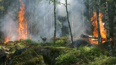 Photo of Africa is currently burning harder than the Amazon forest