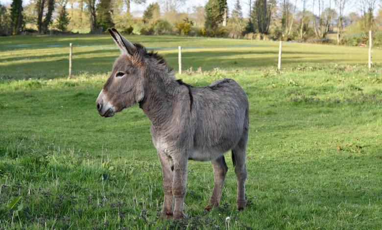 Photo of Climate activist Greta Thunberg receives donkey for transit