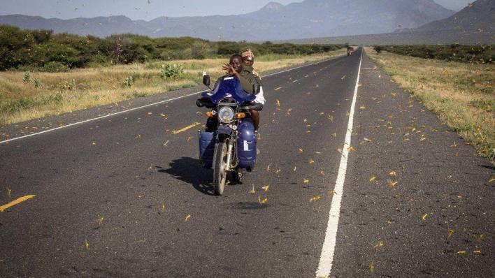 UN calls for locust assistance in East Africa