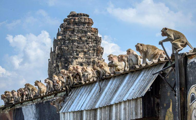 """Photo of """"We must live in cage"""": violent 'monkey gangs' control Thai city"""
