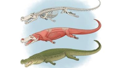 Photo of Size of bus and teeth like bananas: 'Terror crocodile' conquered dinosaurs