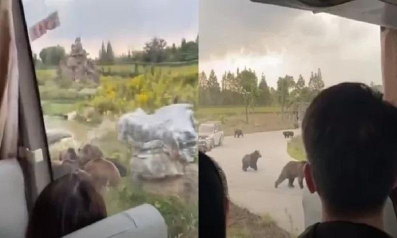 Bear kills zookeeper in front of tourists in Shanghai
