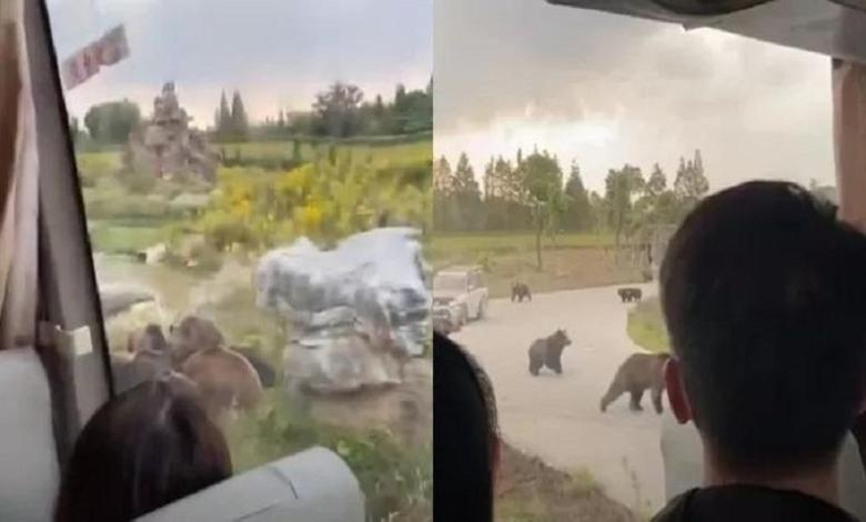 Photo of Bear kills zookeeper in front of tourists in Shanghai