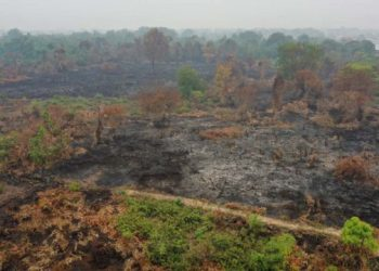 [FILES] This aerial picture shows smouldering peatland after a fire blaize. (Photo by ADEK BERRY / AFP)