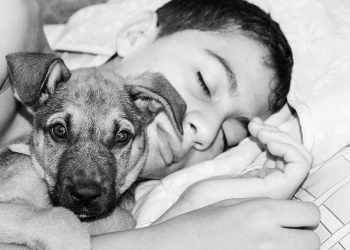 A sleeping kid and a dog | Wallpaper Flare