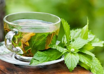 Scent leaf tea is great for weight loss. Photo Dreamstime