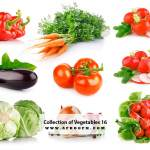 Collection of Vegetables 16