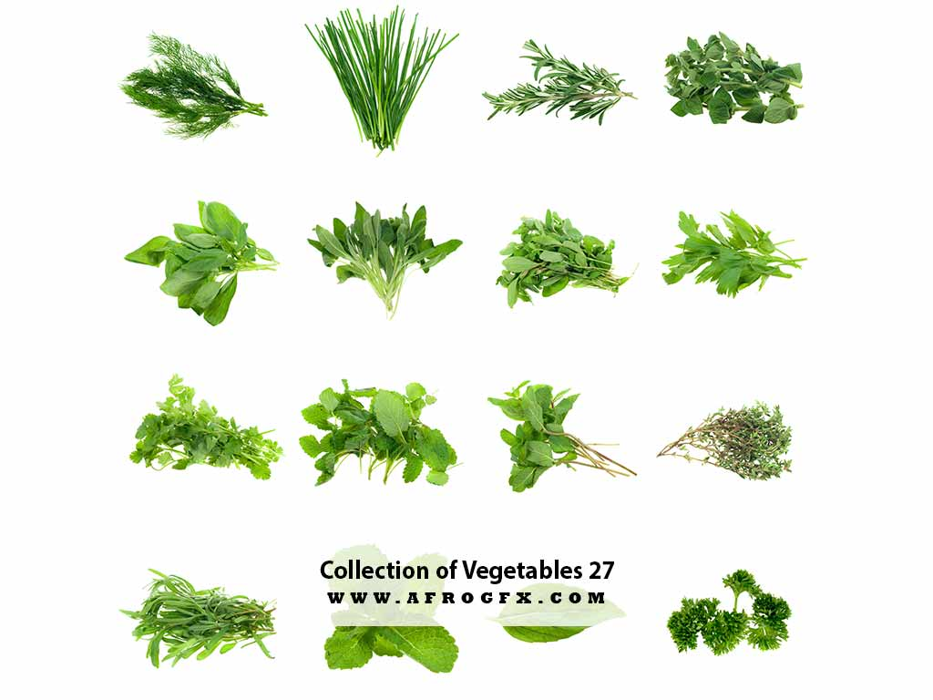 Collection of Vegetables 27