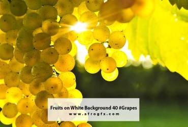 Fruits on White Background 40 #Grapes