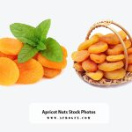 Apricot Nuts Stock Photos