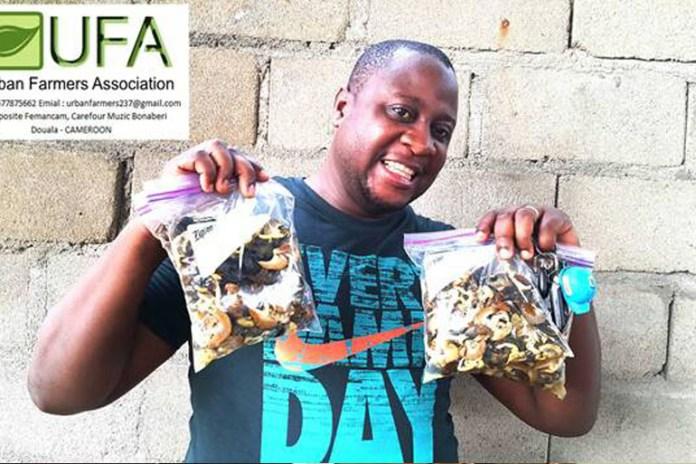 Meet Cameroon's leading Snail Farmer, Rofur Mbukur