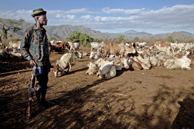 Chipsafer tackles cattle rustling in Africa