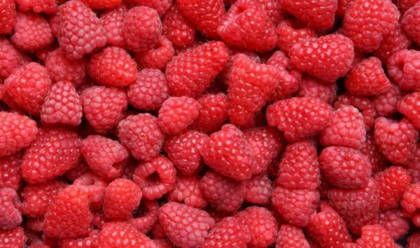 7 foods to help boost your brain power