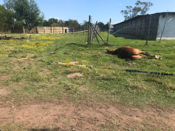Several arrested following horse massacre during protest in PE