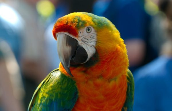 Hilarious: Wildlife park remove Parrots from display for swearing at visitors