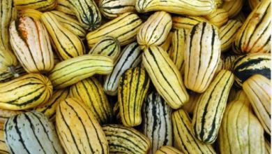 5 astounding health benefits of Delicata squash