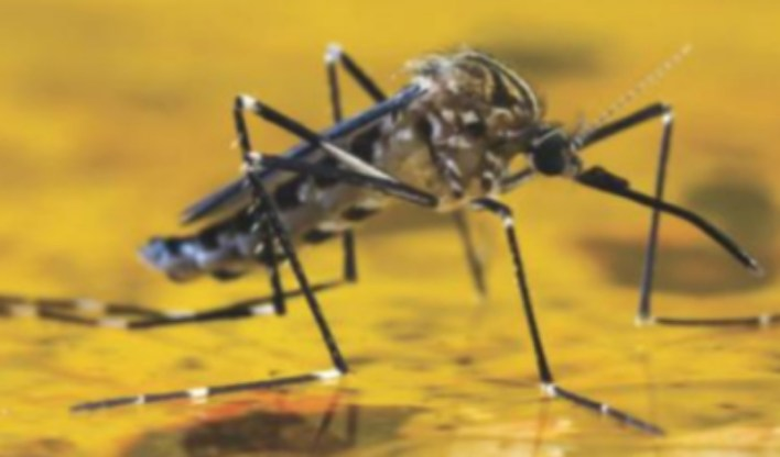 Yellow fever: 'Strange deaths' spread to three Enugu LGAs